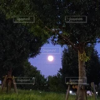 お月様見つけた!の写真・画像素材[4835251]