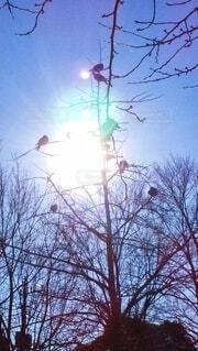 朝陽の当たる樹の写真・画像素材[4841963]