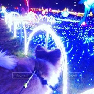 ブルーライトのイルミネーションと小犬の写真・画像素材[4852938]