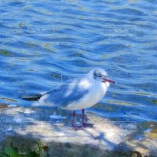 水辺の鳥の写真・画像素材[4852937]