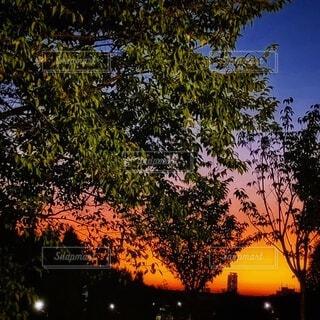 綺麗な夕焼けの写真・画像素材[4858969]