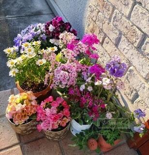 春の植木鉢の写真・画像素材[4935966]