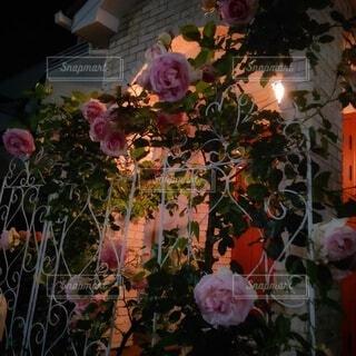 夜の玄関前 薔薇で演出の写真・画像素材[4936075]