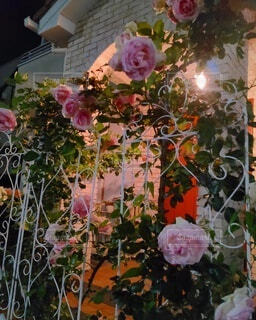 夜の玄関前 薔薇で演出の写真・画像素材[4936076]