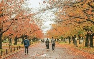 秋の写真・画像素材[4831111]