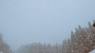 自然,空,冬,雪,屋外,森,霧,樹木,スキー