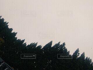 自然,空,冬,雪,屋外,森,樹木
