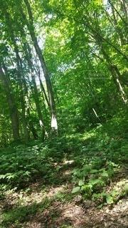 森林,屋外,緑,景色,樹木,新緑,草木