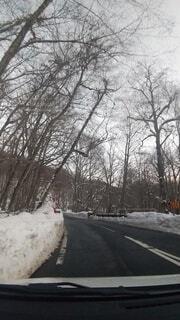 冬,雪,屋外,景色,樹木,日中