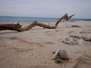 水の体の隣の砂浜に横たわっている人の写真・画像素材[4771906]