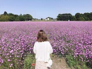 お花畑の写真・画像素材[4772130]