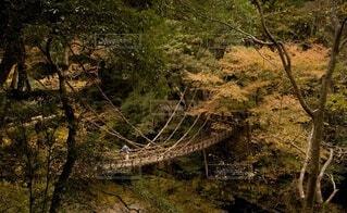 自然,風景,秋,橋,屋外,草,樹木,徳島,秘境,祖谷