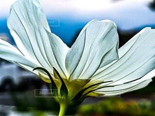 自然,空,花,白い,草花,残暑,初秋