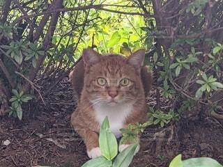 猫,動物,屋外,樹木,地面,かくれんぼ,残暑,草木