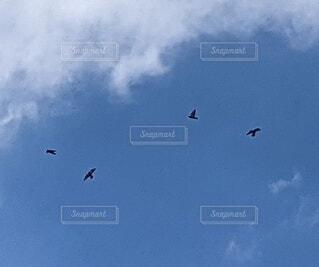 Birds flying freely in the skyの写真・画像素材[4920020]