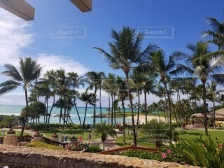 海,空,夏,屋外,ビーチ,景色,樹木,旅行,ヤシの木,ハワイ,グアム,草木,パーム,ヤシ目