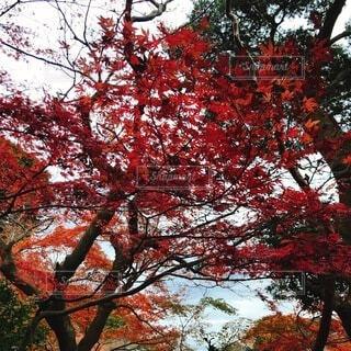 空,秋,屋外,赤,葉,樹木,草木