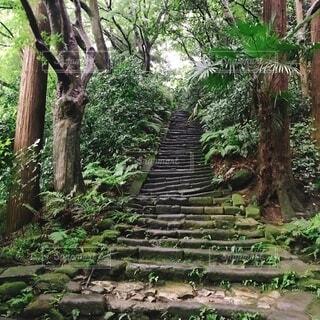 屋外,階段,樹木,草木