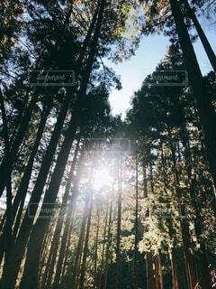 自然,空,屋外,太陽,日光,霧,樹木,草木
