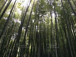 自然,秋,森林,木,屋外,樹木,竹,草木