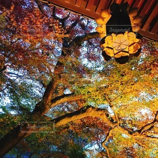 秋,屋外,葉,オレンジ,樹木