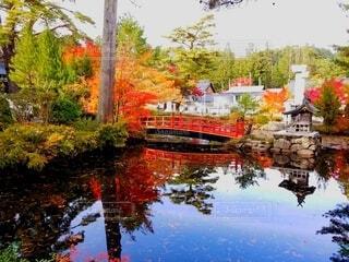 秋,紅葉,屋外,もみじ,高野山