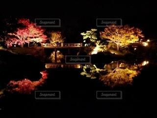秋,紅葉,屋外,暗い,もみじ,ライトアップ,大仙公園