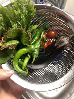 キッチン,野菜,家庭菜園,夏野菜,ナス,ししとう,プランター菜園