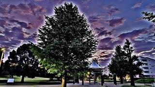 自然,風景,空,秋,屋外,雲,アート,夕方,樹木,癒し,絵画,銀杏,並木道,ストリート,ナチュラル,オーガニック,夕空,草木,ナイト,銀杏並木,バランス,クリスマス ツリー