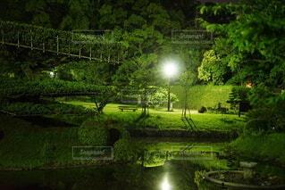 自然,風景,屋外,湖,緑,水面,草,樹木,草木