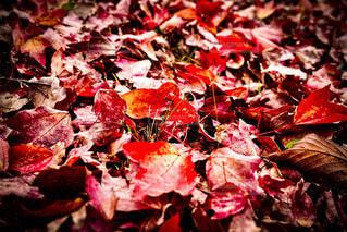 風景,秋,草木