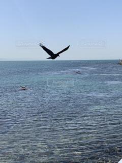 自然,海,空,鳥,青,景色,カラス,日間賀島