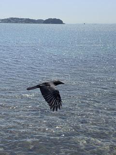 海,空,動物,鳥,屋外,晴れ,晴天,青,水,波,水面,羽,翼,カラス,日間賀島