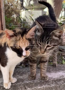 猫,動物,屋外,2匹,ねこ,野良猫,ネコ