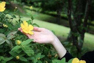 花,屋外,手,草,樹木,人,草木