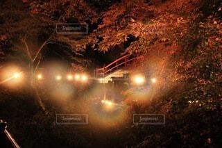 秋,冬,夜,紅葉,屋外,光,樹木,明るい,景観