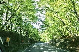 自然,空,森林,木,屋外,緑,綺麗,道路,樹木,道,草木