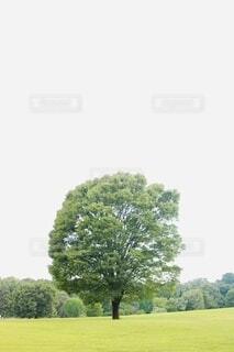 自然,空,木,屋外,緑,景色,樹木,新緑,草木,黄緑
