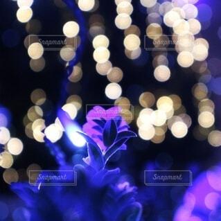 花,青,ぼかし,イルミネーション,照明,明るい,フォトジェニック