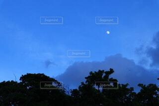 自然,風景,空,夜空,屋外,樹木,月,三日月