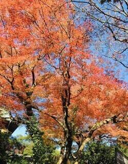 自然,風景,空,公園,秋,屋外,緑,赤,葉,もみじ,樹木,落葉,草木