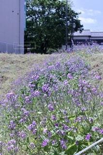 花,屋外,散歩,紫,日常,樹木,雑草,都会,さんぽ,草木