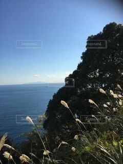 自然,海,空,秋,冬,湖,晴れ,青空,水面,反射,樹木,斜面,初島,すすき