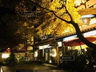 秋,温泉,屋外,観光,樹木,都会,癒し,旅行,明るい,群馬,草津,通り,温泉街