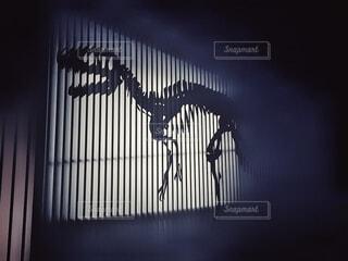 夜,黒,モノクロ,暗い,シルエット,ライトアップ,壁,照明,明るい,福井,骨,トカゲ,爬虫類,ティラノサウルス,恐竜,影絵,標本,壁絵,黒と白,白亜紀,ジュラ紀