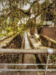 公園,秋,橋,屋外,散歩,レトロ,昭和,散歩道,福井,江戸,明治,石垣