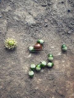 食べ物,秋,屋外,緑,晴れ,茶色,木の実,景色,果物,樹木,どんぐり,顔,地面,砂場,イソギンチャク,草木,未熟