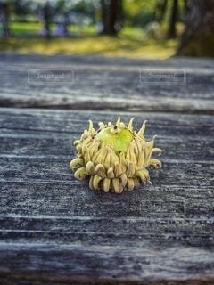 食べ物,秋,屋外,緑,晴れ,木の実,果物,野菜,樹木,どんぐり,パイナップル,地面,イソギンチャク,草木,バナナ,自然食品
