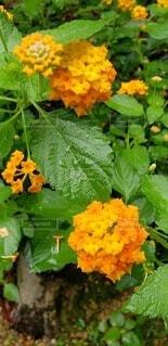 花,屋外,緑,葉,オレンジ,草,草木,フローラ