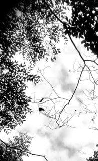 空,屋外,枝,葉っぱ,モノクロ,樹木,草木,スケッチ,図面,支店